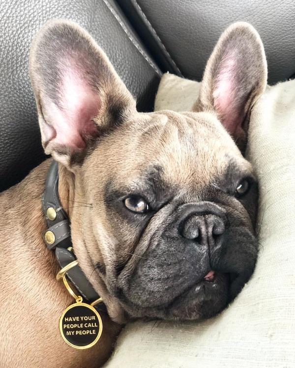 Trill Paws: Streetwear Dog Tags
