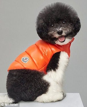 Moncler's Luxury Collection of Dog Jackets