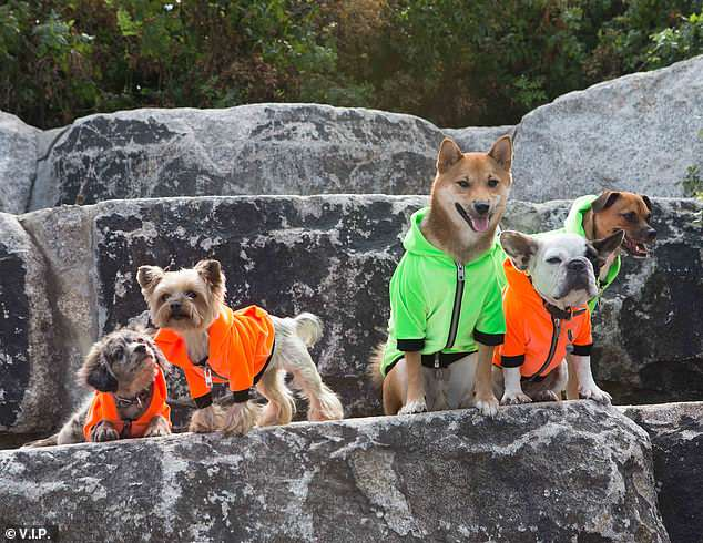 Heron Preston Launches Streetwear Dog Clothing Collection