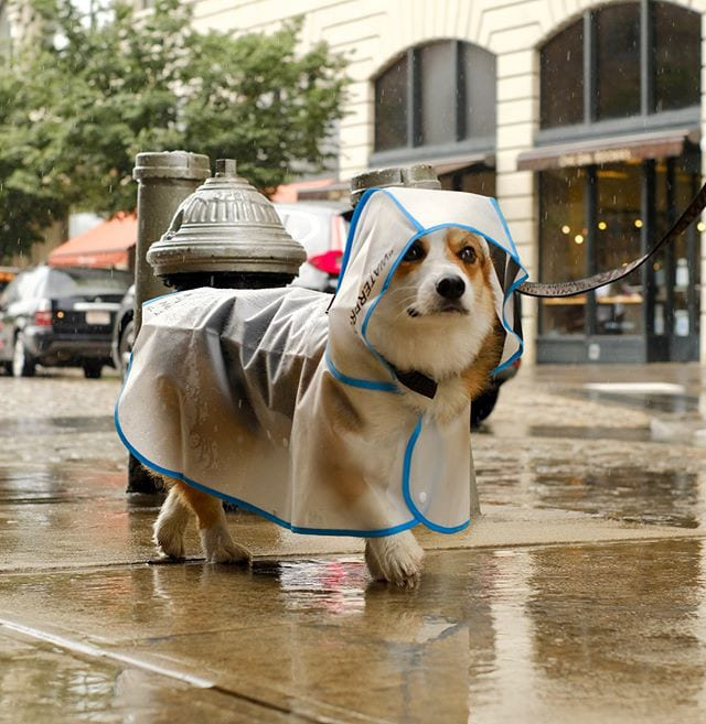 Rain, Rain, Go Away: Rain Jackets by Pawkier