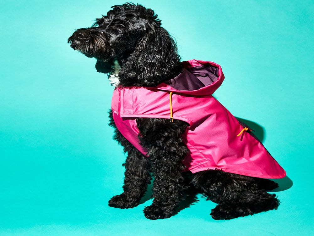 Ware of The Rain: Jackets from WARE of the Dog