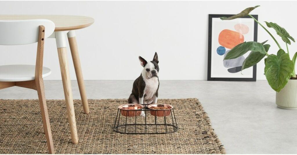 Affordable pet furniture