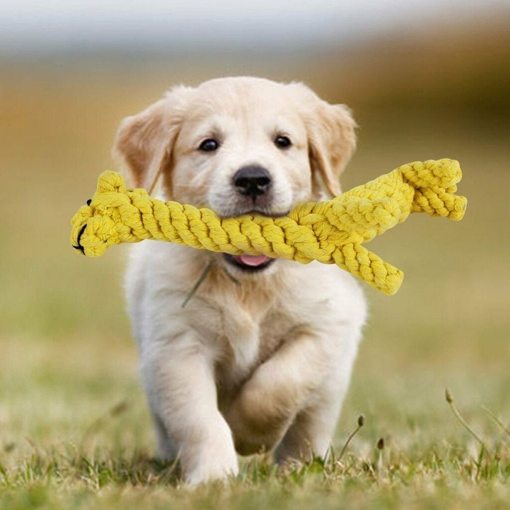 Choosing The Right Dog Toy
