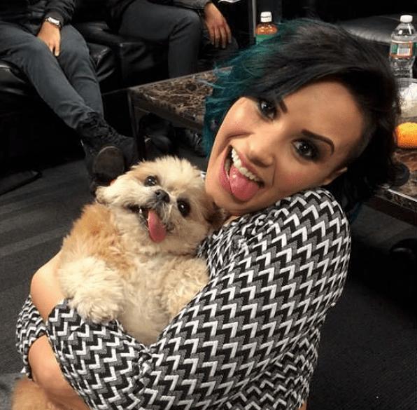 Popular Dog Instagram Accounts
