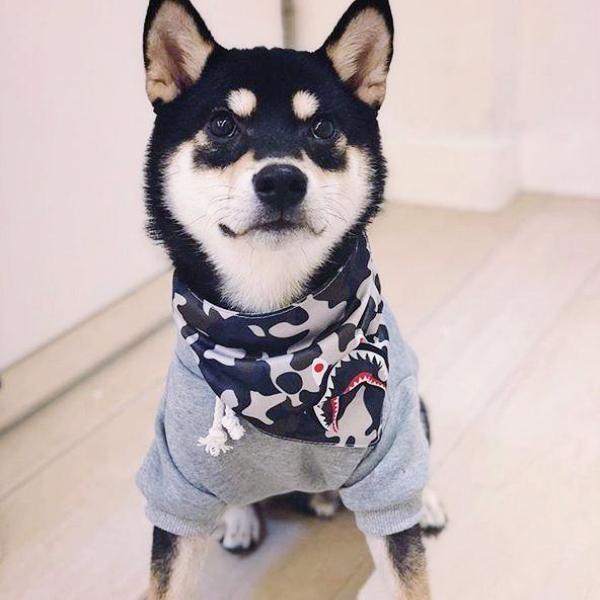 best dog birthday gifts