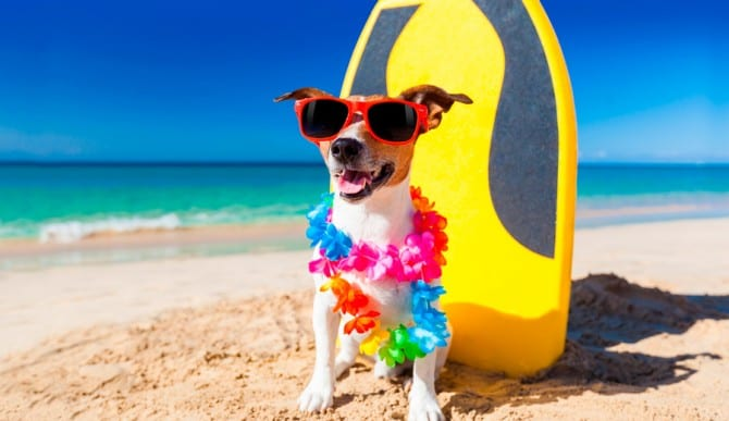 Is salt water bad for dogs?