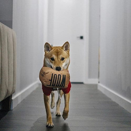 Streetwear Dog Toys