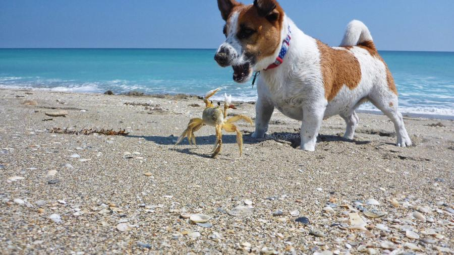 is salt water bad for dogs